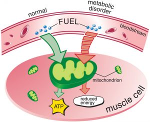 metabolisim